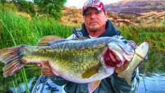 Learn to Fish Glide Baits for Giant Bass - Wired2fish - Scout