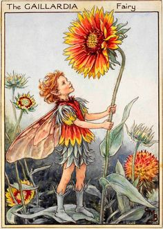 The Gaillardia Fairy - Flower Fairies of the Garden