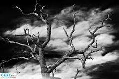 """Résultat de recherche d'images pour """"photographie forme arbre"""""""