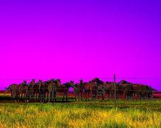 A fine art photograph of Purple Horses, by Martin Garfinkel.  #Route66 #VintageSigns #NeonSigns #MotherRoad #RoadsideAmericana #GhostSigns #Retro #VanishingAmerica #SmallTown #Abandoned #Rustic #Decay #RoadsideAttraction