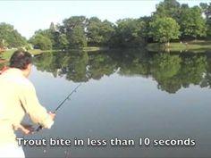 ▶ Rainbow Trout Farm Pond Fishing - Thorndike Maine - YouTube