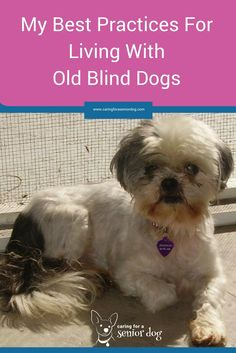 Great for blind dog in new home zip ties in dog collar new house best practices for living with old blind dogs solutioingenieria Images