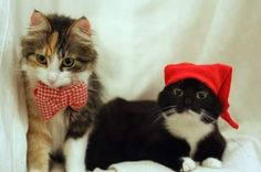 The little one loved the hat but the bow  ...