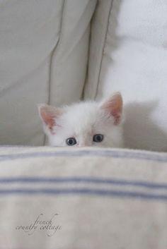 Peek a Boo Cuteness ~