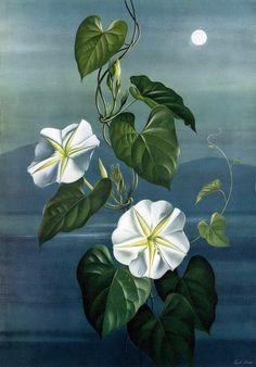 Il mondo di Mary Antony: I fiori di Paul Jones