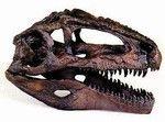 Dinosaur Gifts - Dinosaur Toys Sueprstore, gifts for boys, girls, kids, children, preschoolers, toddlers, skeletons, skulls, jurassic, prehistoric fossils, dinos, buy