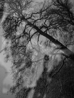 Skullfog and trees