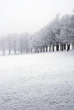 arcanja:  Frozen - Park by #AlexWitt on Flickr.
