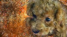 PCペイントで絵を描きました! Art picture by Seizi.N:    愛犬ティアモの赤ちゃんの頃をお絵描きしてみました、こんな時もあったなと思いながら愛情を込めて描...