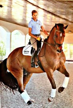 Control of horse by rider indoor riding centre - beautiful