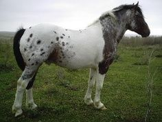 Gorgeous. Just gorgeous. Pintaloosa