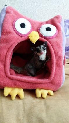 Owl Novelty Bed, Fleecey and seam free for sugar gliders and african pygmy hedgehogs
