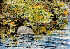 streambank full of marsh marigolds / jessie's stream x micheal zarowsky watercolour on arches paper private collection Marsh Marigold, Arches Paper, Watercolour, Paintings, Fine Art, Bird, Animals, Collection, Pen And Wash