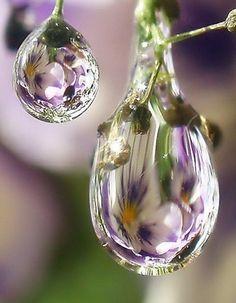 ╭⊰✿ ⍥⍤⍤ ↁᙓᙡ ↁƦᎧᖘᎦ ⍤⍤⍥ ԑ̮̑♦̮̑ɜܓ ~~~~~reflection of flowers in dew drops                                                                                                                                                     More