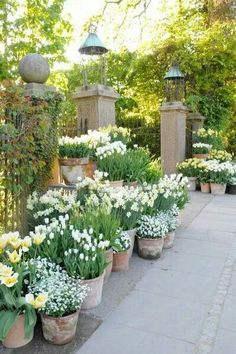 All white potted plants in the garden.