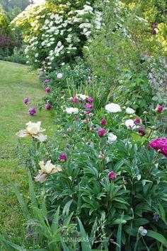 Garden Design, The Originals, Plants, Farmhouse, Landscape Designs, Plant, Planets, Yard Design