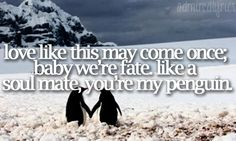 Love like this may come once, baby, it's fate. Like a soulmate, he's your penguin. Baby, it's fate, not luck<3
