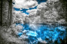 Santa Fe River - Santa Fe River infrared photography North Central Florida