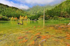 swan lake, Yilan #Taiwan