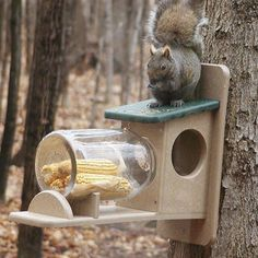 This poly-lumber squirrel feeder is made from recycled plastic and milk jugs that make for a sturdy product that comes with a lifetime guarantee to never cra. Two Tone Poly-Lumber Squirrel Jar Feeder Simone Tee simonskitee Life: im Garten This po Diy Bird Feeder, Humming Bird Feeders, Bird Feeder Plans, Window Bird Feeders, Squirrel Food, Squirrel Proof Bird Feeders, Carpenter Bee Trap, Recycled Jars, Acrylic Panels