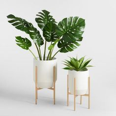 Idea Of Making Plant Pots At Home // Flower Pots From Cement Marbles // Home Decoration Ideas – Top Soop Tropical Home Decor, Tropical Houses, Tropical Interior, Tropical Furniture, Tropical Colors, Bedroom Plants, Bedroom Decor, Office Plants, Interior Plants