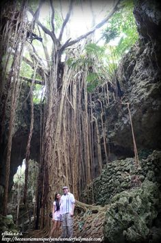 The 150-year-old banyan tree is one attraction in the Valley of Gangala in Okinawa, Japan.
