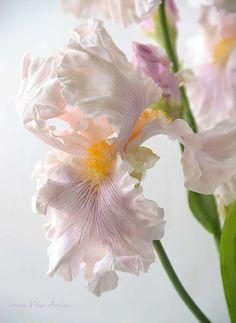 Clay handmade irises, flowers from polymer clay Нежные ирисы. Керамическая флористика - В НАЛИЧИИ - Fito Art