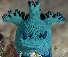 Nudibranch Head On! - Nembrotha by Mark Atwell Underwater Creatures, Underwater Life, Ocean Creatures, Weird Creatures, Life Under The Sea, Under The Ocean, Sea And Ocean, Fauna Marina, Beautiful Sea Creatures