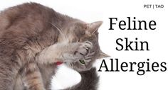 Cat Skin Allergies: How to Identify and Treat Symptoms