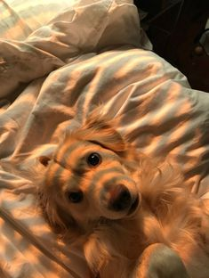 Golden Retriever - Why Are They The Perfect Pets - Doggie Woof Cute Dogs And Puppies, I Love Dogs, Doggies, Animals And Pets, Funny Animals, Funny Dogs, Wild Animals, Farm Animals, Cute Little Animals