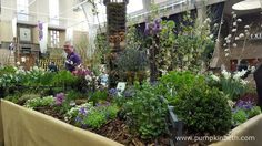 John Cullen Gardens were awarded a Silver Medal at The RHS Spring Plant Extravaganza by the RHS Judges, for their super display, which included lots of plants beneficial to bees and butterflies.