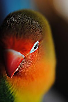 Shy parrot by Linn Andrea Valde - Photo 4621993 / Pretty Birds, Beautiful Birds, Animals Beautiful, Cute Animals, Crazy Animals, Exotic Birds, Colorful Birds, All Birds, Love Birds