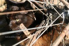 Black cat...home...