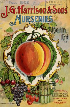 With gardening season upon us, I'm showing off the beautiful covers of some vintage vegetable seed catalogs. Vintage Labels, Vintage Ephemera, Vintage Postcards, Vintage Ads, Vintage Prints, Poster Vintage, Vintage Stuff, Garden Catalogs, Seed Catalogs