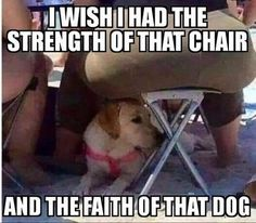 i wish i had the strenght of that chair - Funny,Funny memes,Funny pic,Funny world. Crazy Funny Memes, Funny Animal Memes, Cute Funny Animals, Stupid Funny Memes, Funny Relatable Memes, Haha Funny, Funny Posts, Funny Cute, Funny Stuff
