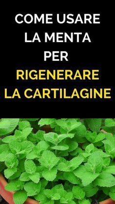 Come rigenerare la cartilagine di anca e ginocchia con la menta Bone and joint pain is widespread due to cartilage damage, especially on the knees and hip. Here's how to regenerate the cartilage o Health And Wellness, Health Tips, Health Fitness, Bone And Joint, Workout Challenge, Natural Health, Natural Remedies, Detox, The Cure