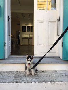 It takes a village and a puppy to raise a gallery. Gallery Two NOLA. Betsy Youngquist Ann Marie Cianciolo Two Artists. Two Women. Two Friends.