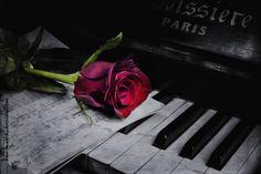 Una rosa by Marthi Alvarez