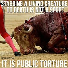 Bullfighters in Spain...shame on you! This is TORTURE and you are tortures of innocent animals...just for fun! Disgusting!!!!