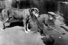 A dog holds onto a little boy as he tries to retrieve a ball in a river with his golf club. 1920s