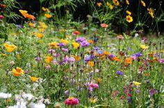 Wildblumen www.monaco-matz.de #monacomatz