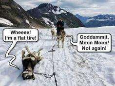 Not again, Moon Moon... - The Meta Picture- there's always that one! This cracks me up!