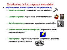 Clasificación de los receptores sensoriales: •   Según el tipo de estimulo que…