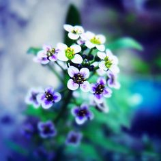 25 Heart Stopping Flower Photography Showcase | TutorialChip
