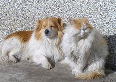 ReadyPhotoSite Blog » Cat & Dog Affairs