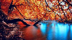 Autumn is my all time favorite season. These are some rare and beautiful Autumn Wallpaper HD for you. These HD wallpapers of autumn charms me. Autumn Lake, Autumn Nature, Autumn Forest, Autumn Garden, Autumn Wallpaper Hd, Nature Wallpaper, Wallpaper Pic, Landscape Wallpaper, Computer Wallpaper