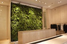 living wall w/reception desk