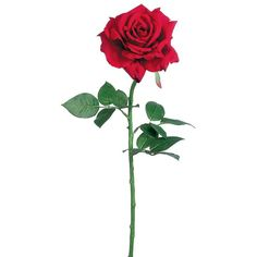 """Diana Open Silk Wedding Rose in Red 5"""" Wide Bloom x 26"""" Tall"""