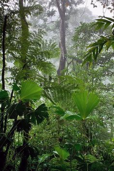 Rainforest along Fortuna River, Costa Rica | Paul Souders, WorldFoto