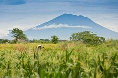 Canggu rice fields and Mount Agung photo credit Chris Litlechild #bali #canggu #volcano